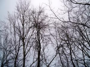 Winter Sky   D. Kelley 2015